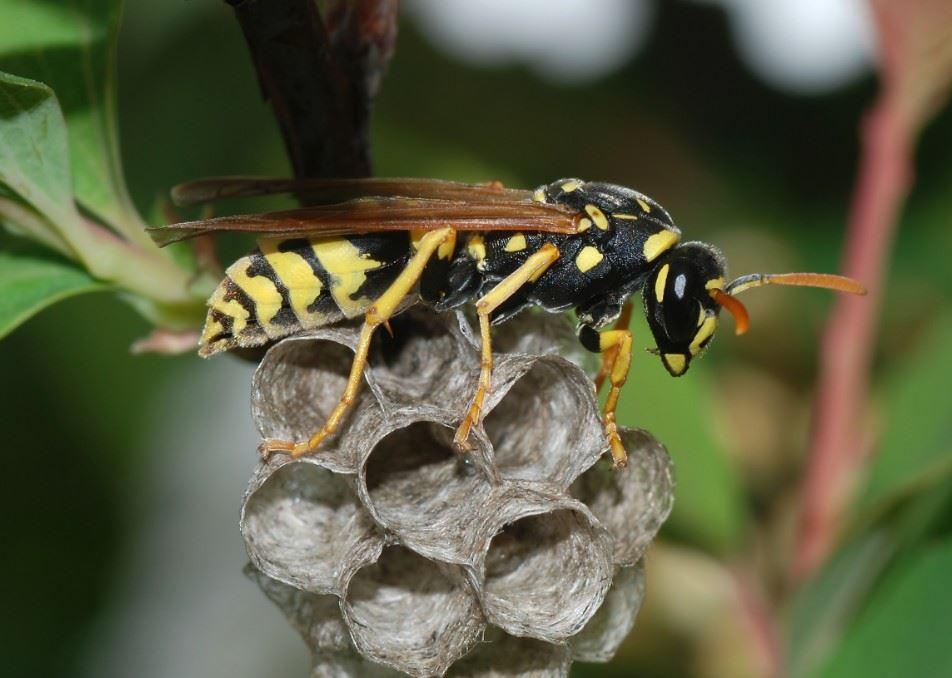 彩色蜂巢好抢眼! 「造纸胡蜂」的梦幻作品像是童话世界的产物